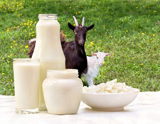 Goat milk protects from stress and mental health problems