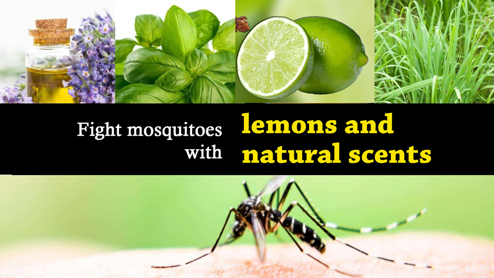 Fight mosquitoes with lemons and natural scents